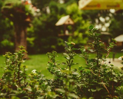 Garten einplanen